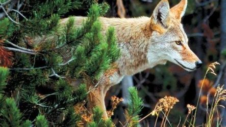 Животные Северной Америки. Описание, названия и виды животных Северной Америки