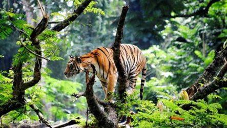 Животные тропического леса. Описание, названия и особенности животных тропического леса
