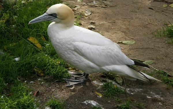 Водоплавающие-птицы-Описание-названия-и-особенности-водоплавающих-птиц-42
