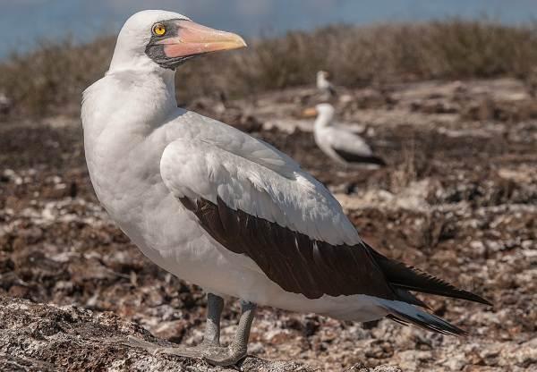 Водоплавающие-птицы-Описание-названия-и-особенности-водоплавающих-птиц-44
