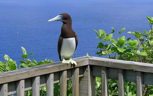 Водоплавающие-птицы-Описание-названия-и-особенности-водоплавающих-птиц-46