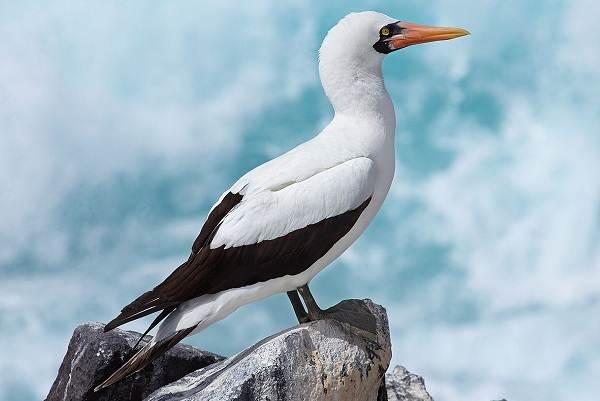 Водоплавающие-птицы-Описание-названия-и-особенности-водоплавающих-птиц-47