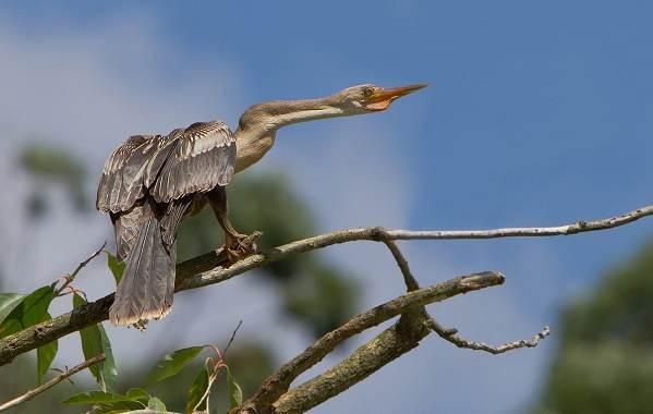 Водоплавающие-птицы-Описание-названия-и-особенности-водоплавающих-птиц-52