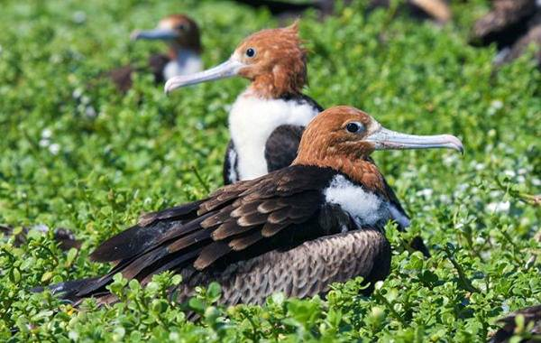 Водоплавающие-птицы-Описание-названия-и-особенности-водоплавающих-птиц-55