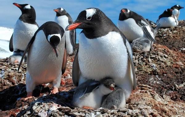Водоплавающие-птицы-Описание-названия-и-особенности-водоплавающих-птиц-65