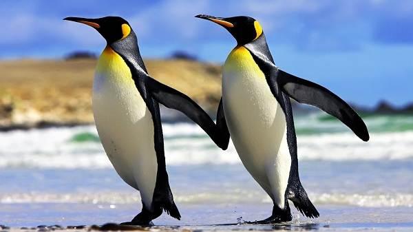 Водоплавающие-птицы-Описание-названия-и-особенности-водоплавающих-птиц-70