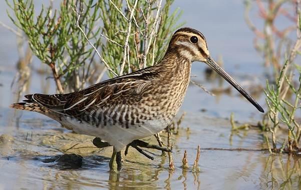 Водоплавающие-птицы-Описание-названия-и-особенности-водоплавающих-птиц-75
