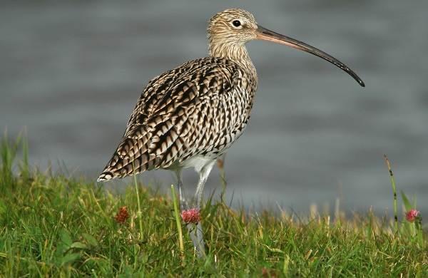 Водоплавающие-птицы-Описание-названия-и-особенности-водоплавающих-птиц-76