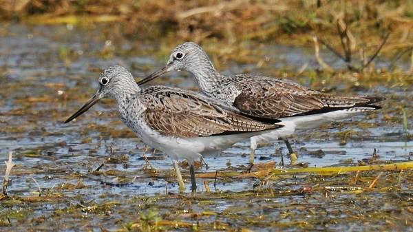 Водоплавающие-птицы-Описание-названия-и-особенности-водоплавающих-птиц-78