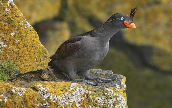 Водоплавающие-птицы-Описание-названия-и-особенности-водоплавающих-птиц-80