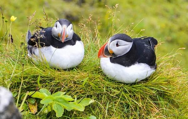 Водоплавающие-птицы-Описание-названия-и-особенности-водоплавающих-птиц-84