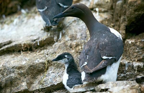 Водоплавающие-птицы-Описание-названия-и-особенности-водоплавающих-птиц-88