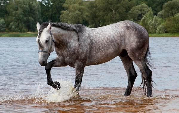 Масти-лошадей-Описание-особенности-и-названия-мастей-лошадей-21