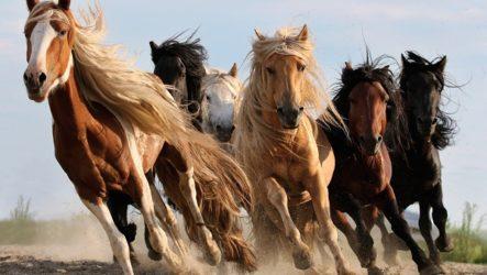 Масти лошадей. Описание, особенности и названия мастей лошадей