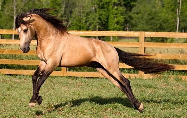 Масти-лошадей-Описание-особенности-и-названия-мастей-лошадей-7