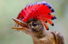 Мухоловка птица. Описание, особенности, образ жизни и среда обитания мухоловки