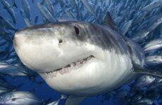 Виды акул. Описание, названия и особенности видов акул