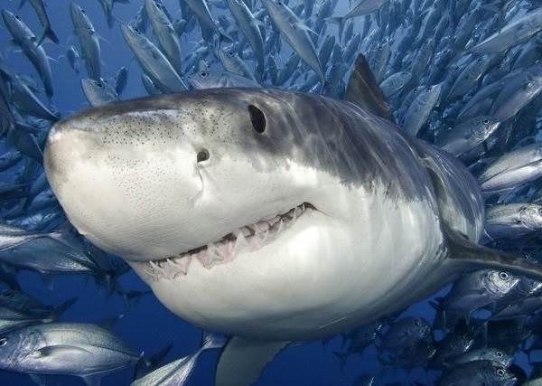 Виды-акул-Описание-названия-и-особенности-видов-акул-1