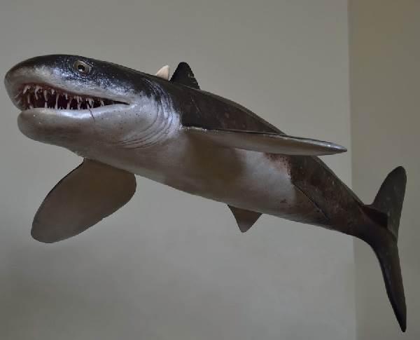Виды-акул-Описание-названия-и-особенности-видов-акул-10