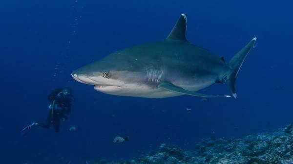 Виды-акул-Описание-названия-и-особенности-видов-акул-15