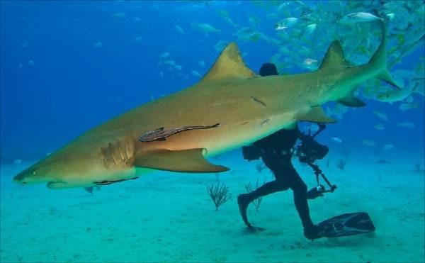 Виды-акул-Описание-названия-и-особенности-видов-акул-17