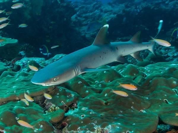 Виды-акул-Описание-названия-и-особенности-видов-акул-18