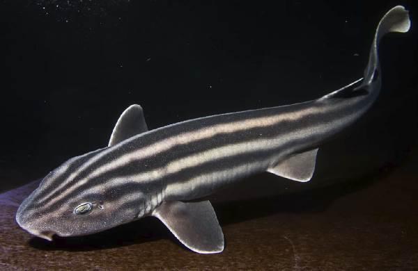 Виды-акул-Описание-названия-и-особенности-видов-акул-20