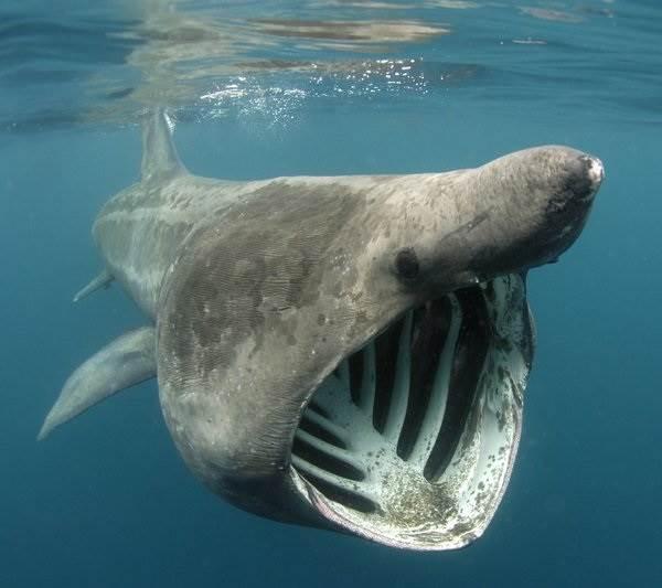 Виды-акул-Описание-названия-и-особенности-видов-акул-3