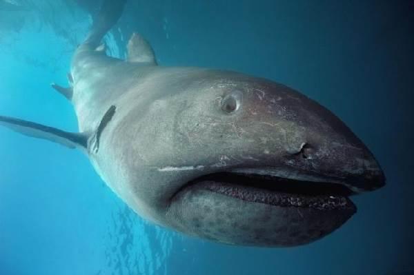 Виды-акул-Описание-названия-и-особенности-видов-акул-4
