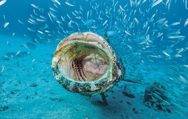 Групер-рыба-Описание-особенности-и-среда-обитания-рыбы-групер-17