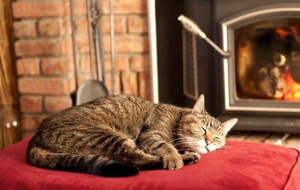 Кастрация-кота-Описание-особенности-и-цена-процедуры-кастрации-кота-12