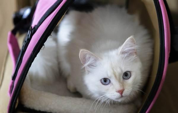 Кастрация-кота-Описание-особенности-и-цена-процедуры-кастрации-кота-9