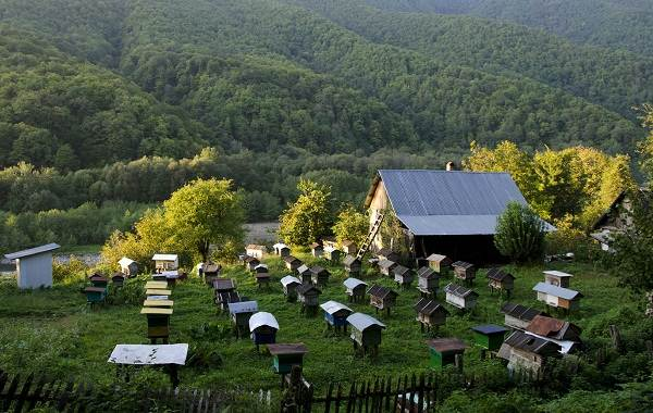 Пчела-насекомое-Описание-особенности-виды-образ-жизни-и-среда-обитания-пчелы-14