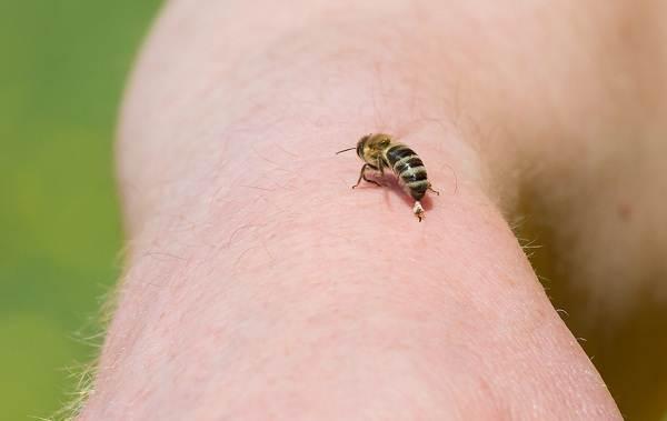 Пчела-насекомое-Описание-особенности-виды-образ-жизни-и-среда-обитания-пчелы-20