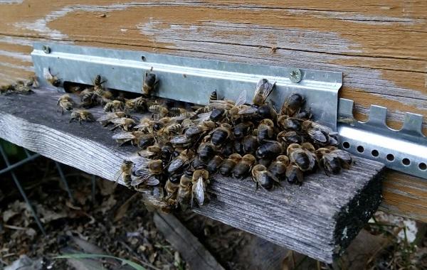 Пчела-насекомое-Описание-особенности-виды-образ-жизни-и-среда-обитания-пчелы-23