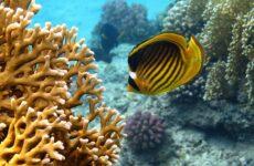 Рыбы Красного моря. Описание, особенности и названия рыб Красного моря