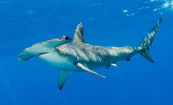 Рыбы-Красного-моря-Описание-особенности-и-названия-рыб-Красного-моря-11