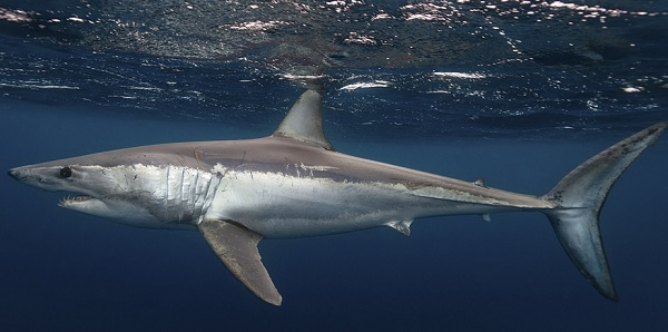 Рыбы-Красного-моря-Описание-особенности-и-названия-рыб-Красного-моря-12