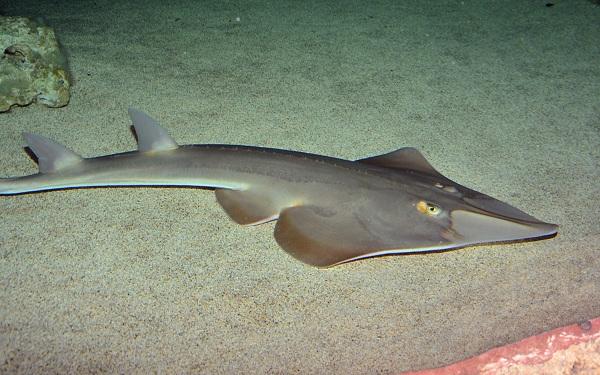 Рыбы-Красного-моря-Описание-особенности-и-названия-рыб-Красного-моря-16