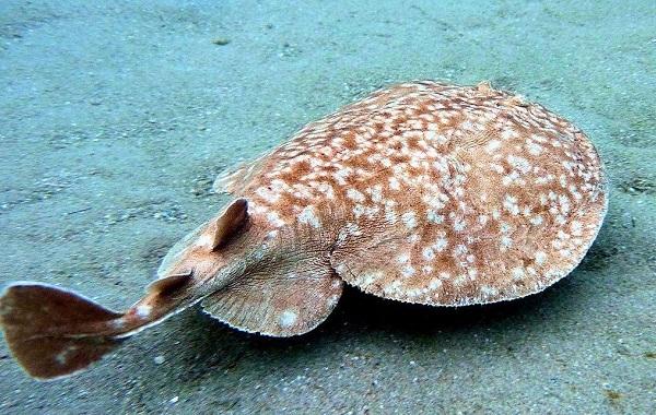 Рыбы-Красного-моря-Описание-особенности-и-названия-рыб-Красного-моря-17