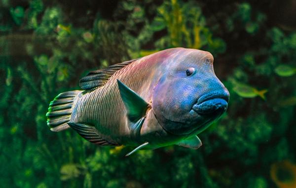 Рыбы-Красного-моря-Описание-особенности-и-названия-рыб-Красного-моря-22