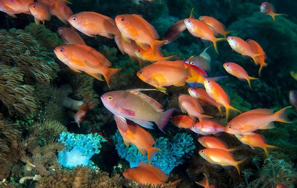 Рыбы-Красного-моря-Описание-особенности-и-названия-рыб-Красного-моря-23