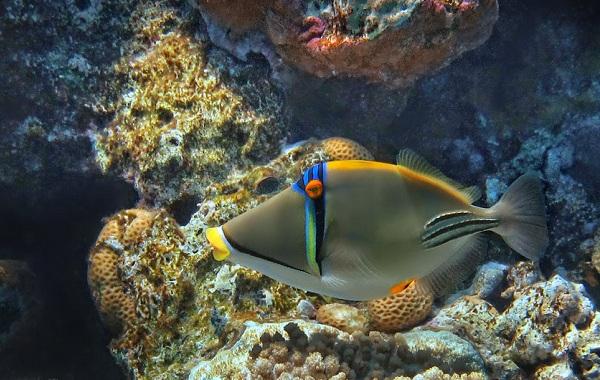 Рыбы-Красного-моря-Описание-особенности-и-названия-рыб-Красного-моря-29