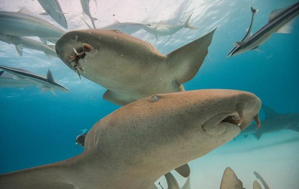 Рыбы-Красного-моря-Описание-особенности-и-названия-рыб-Красного-моря-3