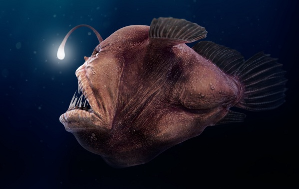 Рыбы-Красного-моря-Описание-особенности-и-названия-рыб-Красного-моря-33