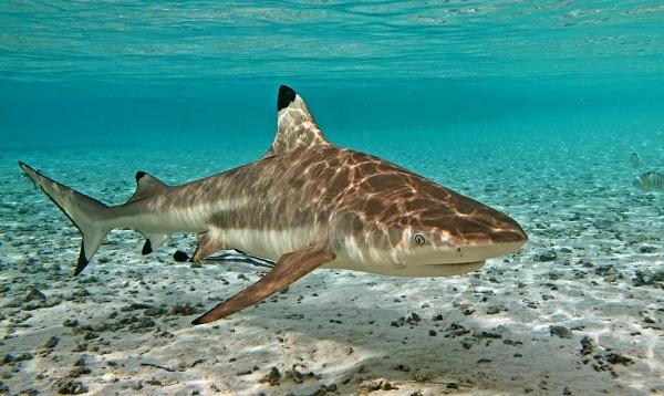 Рыбы-Красного-моря-Описание-особенности-и-названия-рыб-Красного-моря-4
