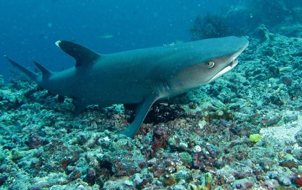 Рыбы-Красного-моря-Описание-особенности-и-названия-рыб-Красного-моря-6