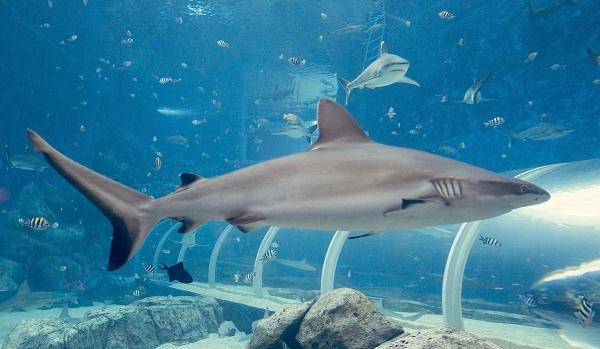 Рыбы-Красного-моря-Описание-особенности-и-названия-рыб-Красного-моря-8