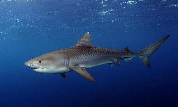 Рыбы-Красного-моря-Описание-особенности-и-названия-рыб-Красного-моря-9