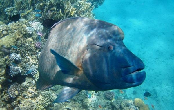 Рыбы-Красного-моря-Описание-особенности-и-названия-рыб-Красного-моря